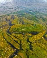 Байкал покрывается вредной зеленью