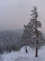 Из Австрии начали вылетать и выезжать домой первые партии застрявших на альпийских курортах горнолыжников.