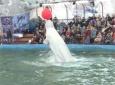 Геленджикский дельфинарий в Минске. Закулисье
