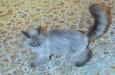 Что случилось с котом Медведева? Расследование блогеров