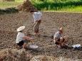 Китай планирует стать крупнейшим арендатором украинских земель