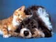 Путешествия вместе с домашними животными