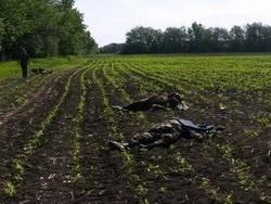 Армия Украины на грани бунта против хунты