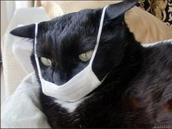 СПИД, Свиной грипп, Птичий грипп, Эбола и прочие байки из склепа