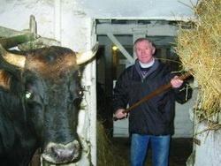 Молочный концлагерь или как стать канадским фермером