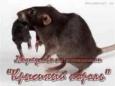 """Кто будет """"крысиным королем"""" белорусской оппозиции?"""