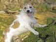 Как пёс отыскал погибающего в лесу хозяина