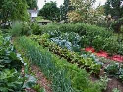 В России растет потребление садово-огородного инвентаря