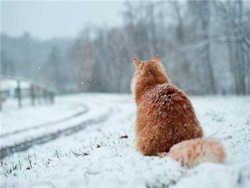 Грядет самая холодная зима за последнее столетие
