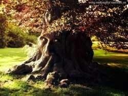 Цивилизация деревьев: как они общаются и чем похожи на людей