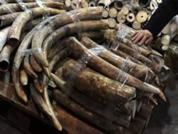 Глобальное потепление и торговля мамонтовой костью