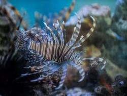 Роботы-убийцы против аквариумной рыбки