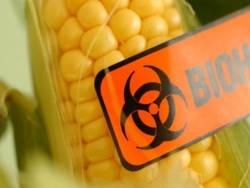 Несколько причин остерегаться ГМО