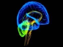 Исследования показывают - власть повреждает мозг