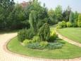 Озеленение приусадебных участков хвойными растениями