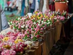 Купить цветы с доставкой в Днепре