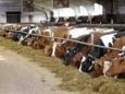 Мясная индустрия потребляет 80% всех антибиотиков