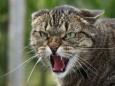 Психология домашних кошек и котов