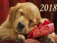 Как встретить и что подарить своим близким в Новый 2018 год Желтой Собаки?