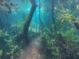 Река с кристально чистой водой вышла из берегов (видео)