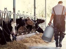 Сухое молоко банкротит фермеров России