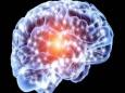 Ученые вырастили у мышей мозговую ткань человека