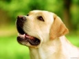 Собака и жизнь человеческая