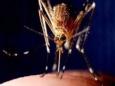 Комары питаются микропластиком