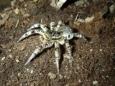 Деревню в Гомельской области атаковали крупные пауки