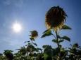Короткая зима и длинное лето плохо влияют на растительность