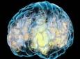 Герпес может вызвать болезнь Альцгеймера