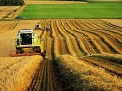 На каждого белоруса производится 675 кг картофеля и 771 кг молока