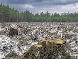 Россия катится в безлесье