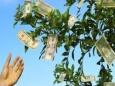 Как лишить доллар статуса мировой резервной валюты
