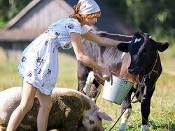 Спокойствие деревенской жизни