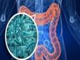 Кишечные бактерии управляют нашим сознанием