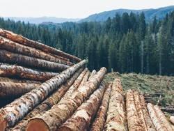 Российский лес подает сигнал SOS