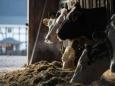 В Беларуси выявлены опасные молочные продукты из России