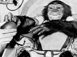 Животные, повлиявшие на ход истории