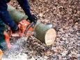 Масштабы незаконной вырубки русского леса