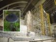 На заброшенной Чернобыльской АЭС растут грибы