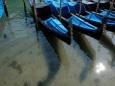 В Венеции в каналах появились лебеди и рыбки
