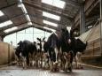 Лейкозному молоку в России дали зеленый свет