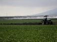 Западная Европа завозит гастарбайтеров для спасения урожая