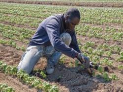 Сколько черных фермеров в США