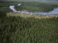 Леса регулируют климат и производят ветер