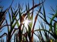 Рост углекислого газа приводит к низкокачественной пище