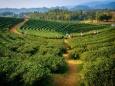 Продовольственная безопасность и агроэкология