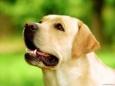 Почему собаки лижут (а иногда и кусают) свои лапы