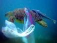 Исследователь океана: Мы едим рыбу с пластиком и ртутью
